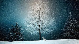 vorweihnachtszeit trauer